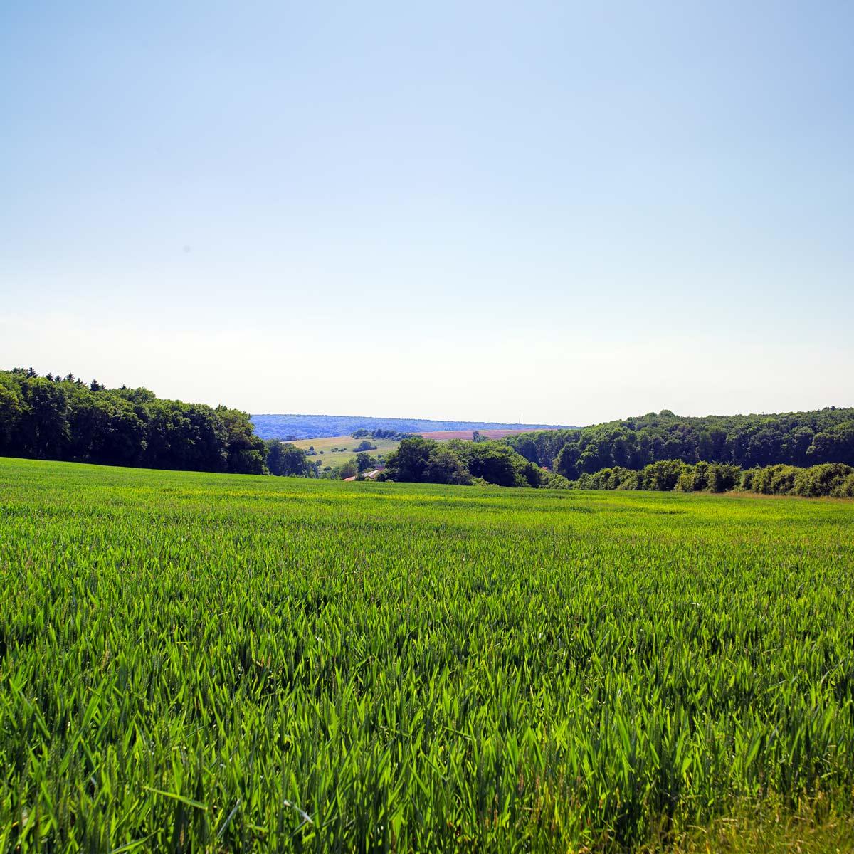 Céréalier allemand dans la région de Sahrbruck